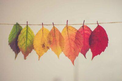 Fall 2021 Gnc Newsletter Leaves